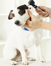 Los Angeles Pet Skin Allergies