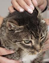 Pet Dermatology in Los Angeles
