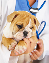 Pet Vaccinations in Los Angeles