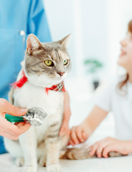 Animal Hospital in Los Angeles | West LA Veterinary Group