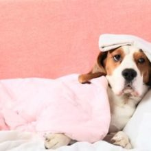Canine Influenza: Pet Owners' Guide